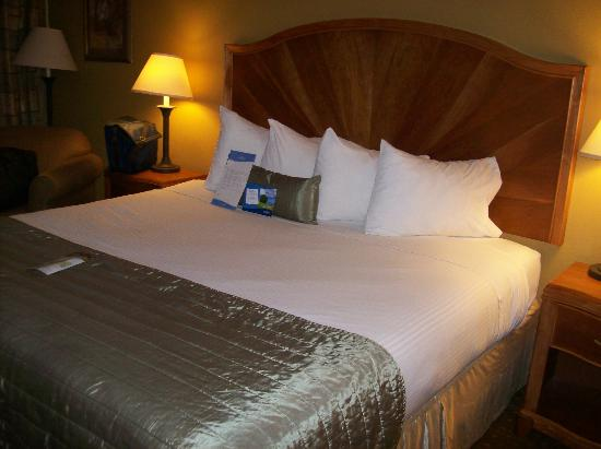 Baymont Inn & Suites Asheville/biltmore: This was the bed in both rooms, looks good, sleeps terrible