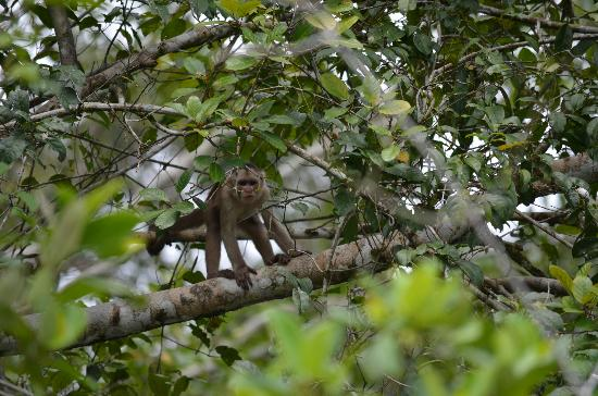 La Selva Amazon Ecolodge: Monkeys on the lake