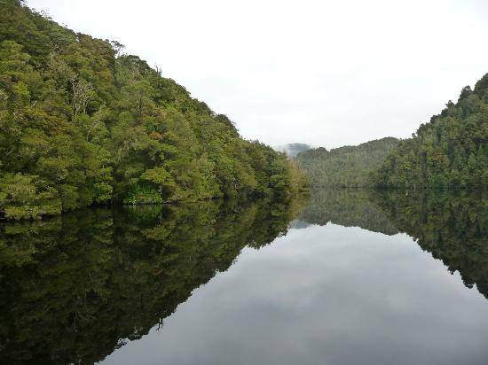 West Coast Yacht Charters - Day Tour : The tranquil mirror image reflections on the Gordon River