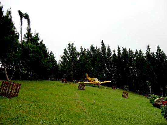 Pinegrove Mountain Lodge: Lovely and refreshing view of pine trees everywhere