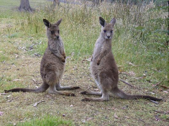 Tasmanian Wilderness Experiences - Base Camp Tasmania: Wildlife at BCT