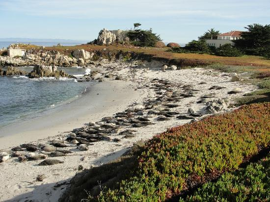 Green Gables Inn, A Four Sisters Inn: Seals on beach a few steps from Inn