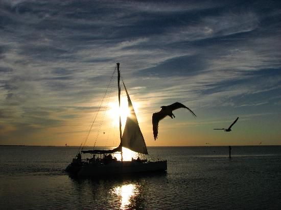 Southern Wave Sailing Charters: Sunset Dinner Cruise