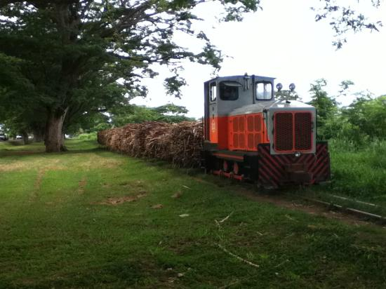 Tanoa International Hotel: Sugar cane harvest, real life Fiji