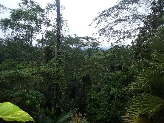 Princesa de la Luna Eco Lodge: A view of the jungle out of the back lower porch