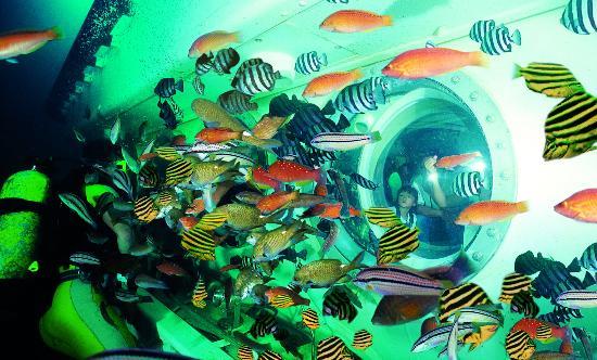 Seogwipo Submarine: 물고기와 다이버쇼