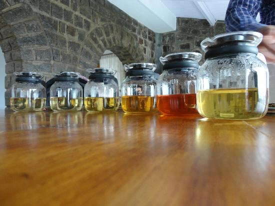 Tranquilitea Farm Stay: Tea tasting session with Sandeep- Don't miss it