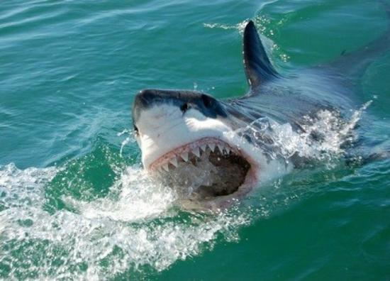 Cape Town Seamore Express Tours and Guesthouse: Great White Shark Cage Diving with Seamore-Express Tours and Guesthouse