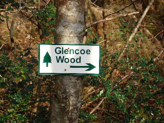 Highland Titles Nature Reserve: Glencoe Wood