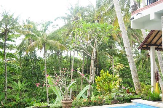Deta Junjungan Rice Field Villa: La Vue depuis la villa