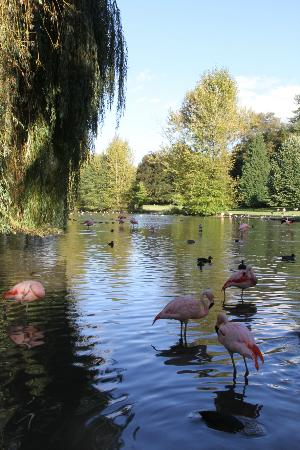 Parc de Cleres: le lac des flamants / pink flamingo lake