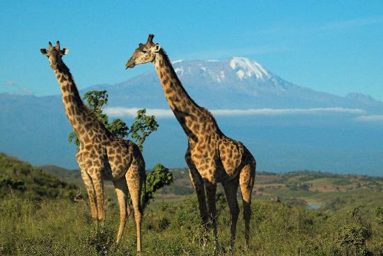 Hatari Lodge: Kilimanjaro