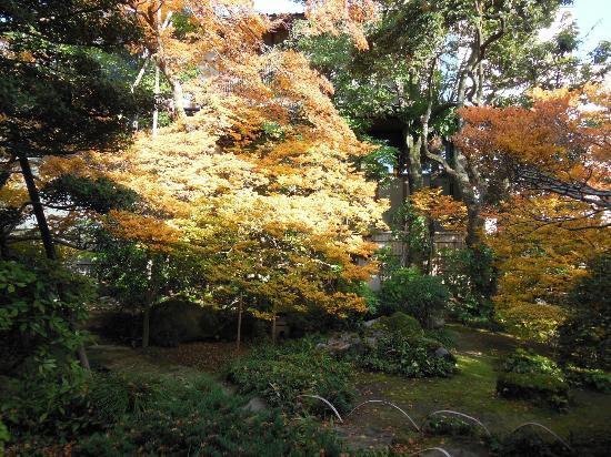 Terashima Kurando Samurai Villa: ドウダンツツジ