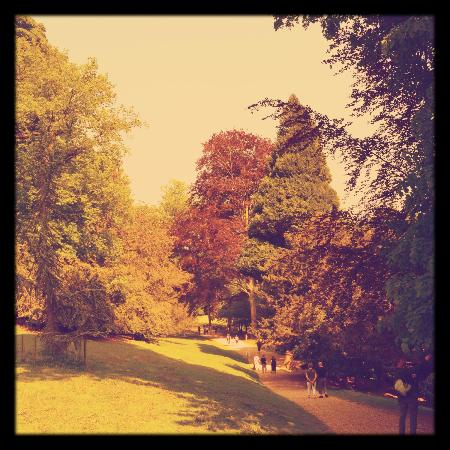 Parc de Cleres: des arbres centenaires/ hundred-year-old trees