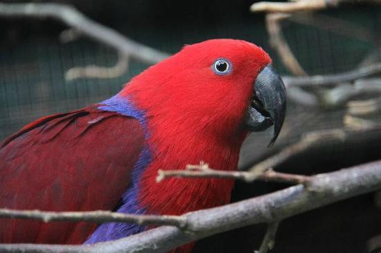 Parc de Cleres: des oiseaux exotiques / exotic birds