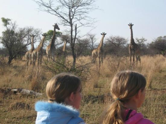 Ditholo Game Lodge: Child friendly environment!!