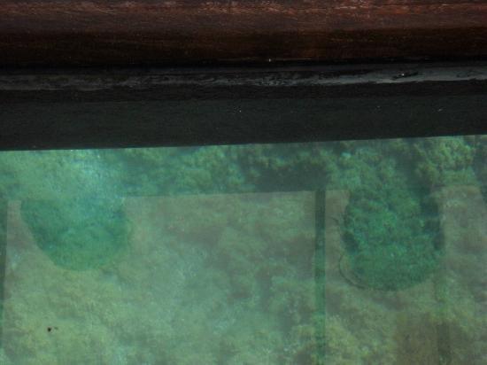 Parco Sommerso di Gaiola Area Marina Protetta: visuale marina