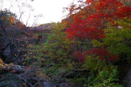 Nichien Momiji Line: 白滝周辺の紅葉