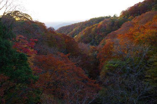 Nichien Momiji Line : もみじラインから見た紅葉