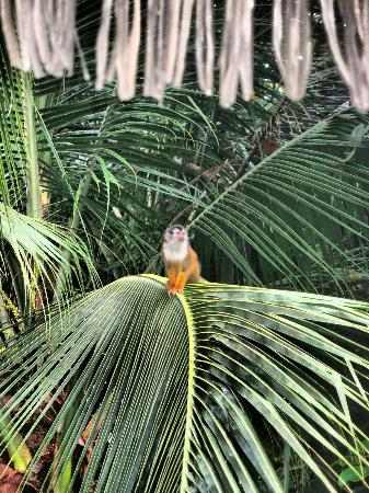 squirrel monkey....wake up early and see what passes you by!