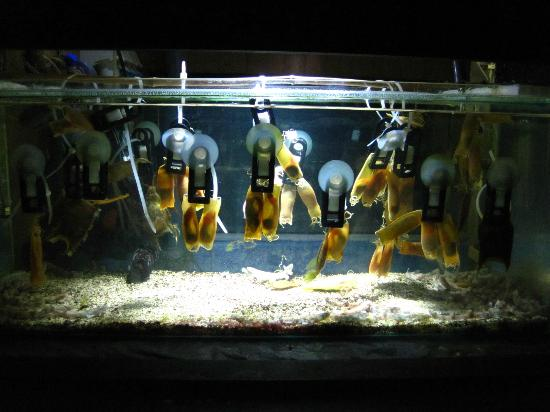 ... Ray - Picture of National Sea Life Centre, Bray - TripAdvisor