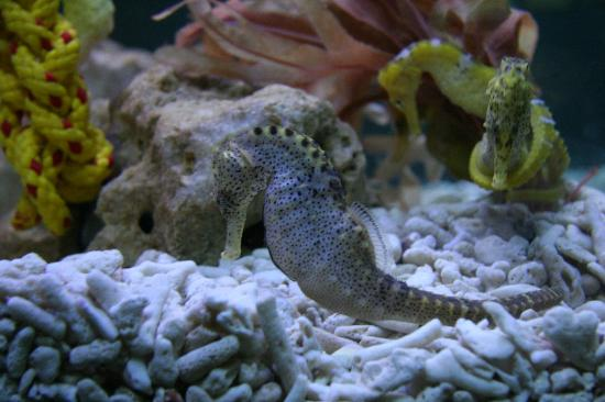 ... Ray - Picture of National Sea Life Centre, Bray - TripAdvisor