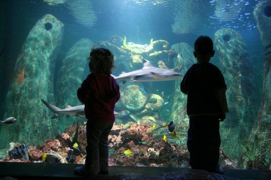 National Sea Life Centre: Tropical Ocean Tank, home to 10 species of ...
