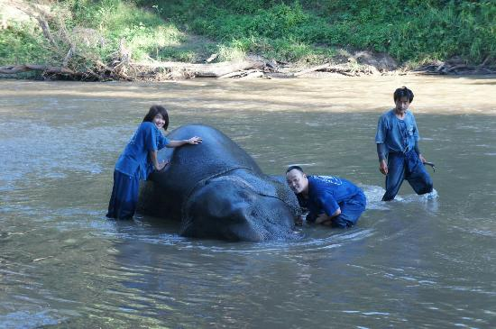 Mae Taeng, Thailand: Giving the elephants a bath...they loved it.