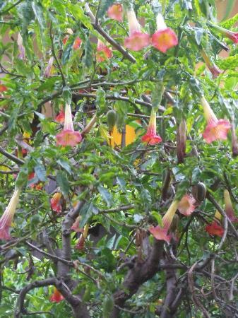 El Albergue Ollantaytambo: garden