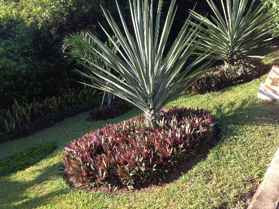 Grand Sirenis Riviera Maya Resort & Spa : Grounds