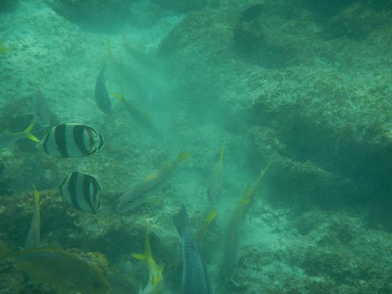 Northeast Coast, Tobago: reef fish