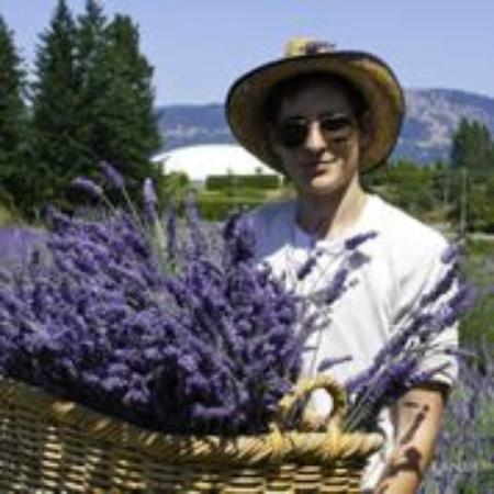 Damali Lavender Farm and B&B : Harvesting