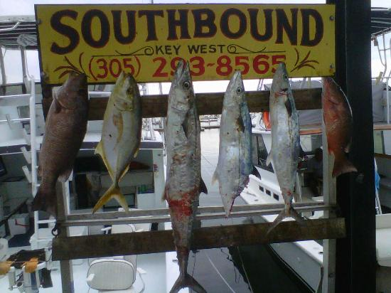 Southbound Charters