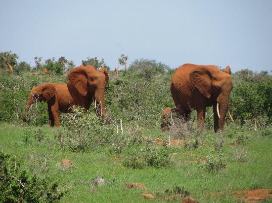 In2kenya: elefantiiii