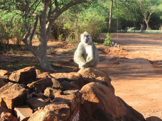 In2kenya: meditazione