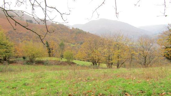 BALNEARIO RURAL MIRADOR DE MIRANDA: Campo de manzanos con vistas en la ladera tras el hotel