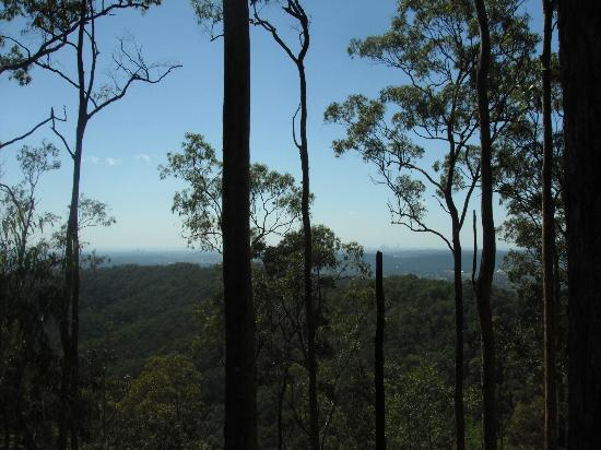 Southern Cross 4WD Tours: Tamborine mountain