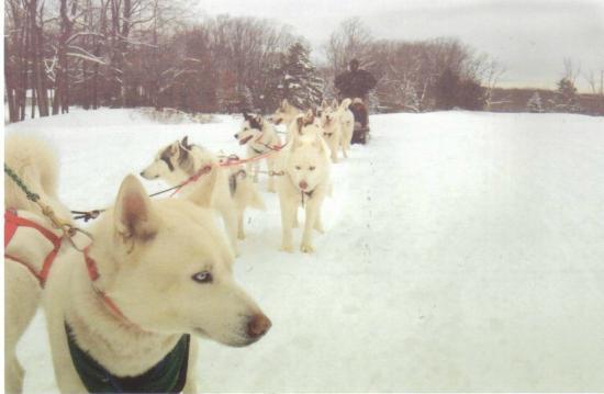 Arctic Paws Dog Sled Tours: Slow start