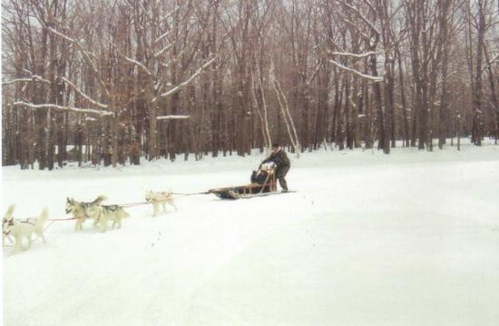 "Arctic Paws Dog Sled Tours: My husband ""mushing"""