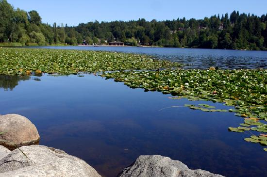 Explore trails and wildlife at Deer Lake Park or one of Burnaby's other parks