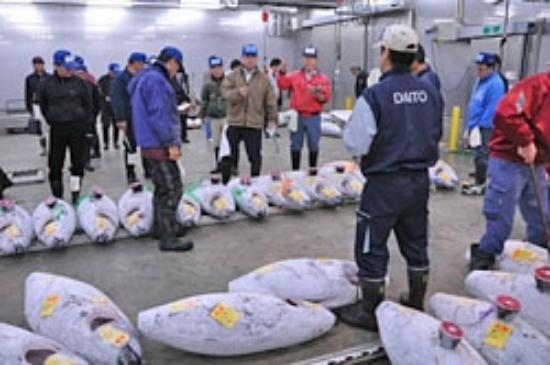 Нарита, Япония: Tuna auction at the Narita Wholesale Market