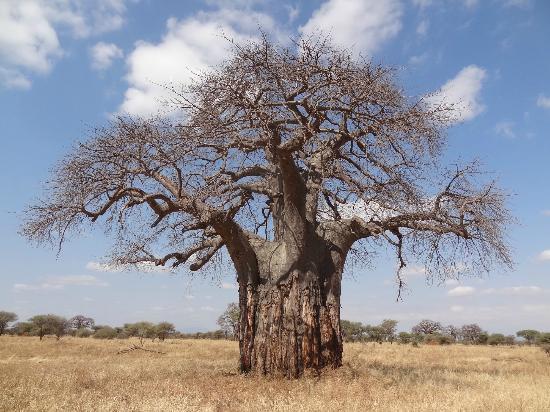 Warrior Trails Day Tour: Baobab