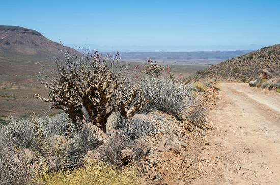 Tankwa Karoo National Park: Plant along Gannaga pass