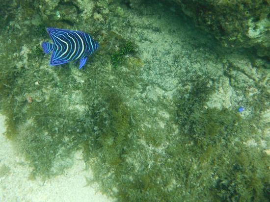 Naviti Resort: Snorkelling
