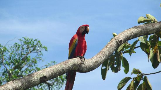 Cabinas Tropicales: Macaw