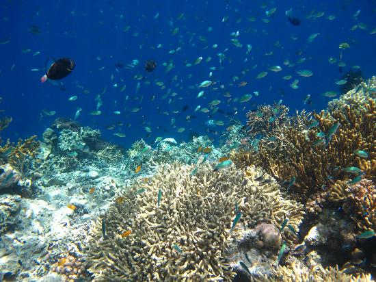 Corals and fish of Menjangan Island