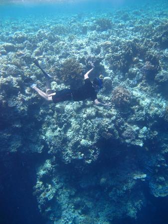 My friend explore the Menjangan Island Coral Walls