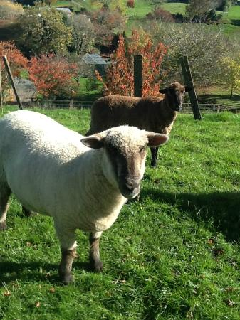 Broekhaven Country Cottage: Meet our friendly farm animals