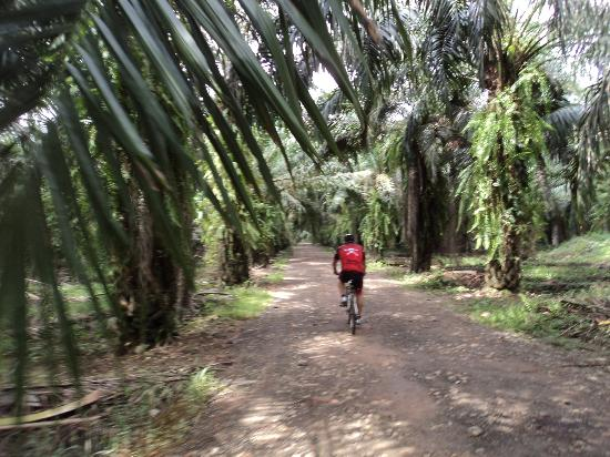 Manuel Antonio Quepos Tours: a ride through the plantation