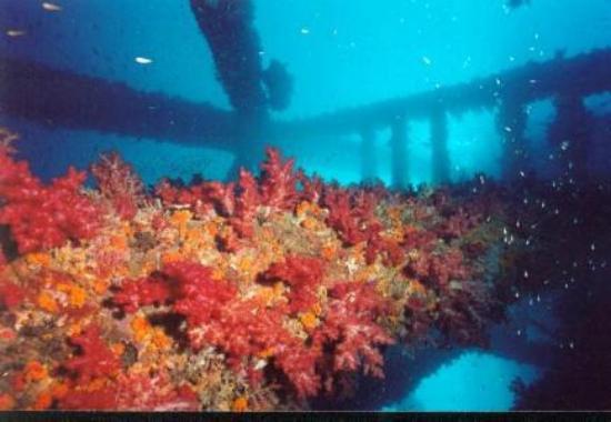 Co Co Dive: Siwa Oil Rig
